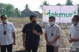 Melalui program Makmur,  Kementerian BUMN ingin sejahterakan petani