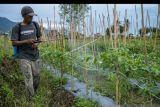 OJK  dorong perbankan di Sulteng beri fasilitas resi gudang ke petani
