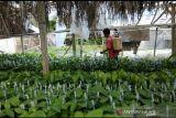 36 petani milenial di Maros Sulsel terima dana hibah pemkab