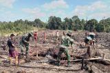 Mencoba  praktik  nilai luhur, TNI perbatasan ikut tradisi nugal padi suku Dayak