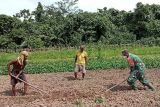 TNI bantu olah lahan pertanian warga Mananayam Yapen Papua
