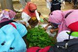 Pemkot Pekalongan bagikan bibit cabai rawit gratis