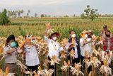 Mentan: Kabupaten Kupang jadi daerah percontohan pertanian terintegrasi