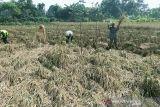 Penggabungan PT Pertani ke Sang Hyang Seri ciptakan ekosistem pangan