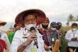 Mentan dorong petani NTT asuransikan tanaman padi