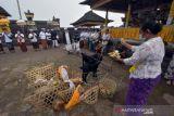Ritual Penyucian Hewan Kurban Di Bali