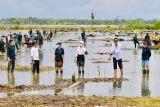 Jokowi tanam mangrove bersama para dubes di Tana Tidung