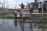 Undip bantu ubah selokan kumuh di Kudus jadi kolam ikan