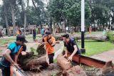 Pohon pinus tumbang di objek wisata Pantai Kata, tak ada korban jiwa