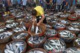 Pemerintah Gencarkan Kampanye Konsumsi Ikan Cegah Stunting