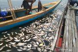 Ikan mati di Waduk Jangari capai 200 ton