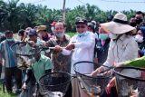 Kabupaten Banyuasin gencarkan budidaya ikan patin, luncurkan program