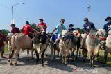 Solo Great Sale kirab 20 sapi untuk promosikan pariwisata