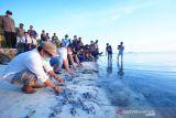 Bupati Pangkep tanam 2.000 mangrove di Pulau Sapuka