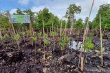 BRGM rehabilitasi 1.500 hektare hutan mangrove di Papua Barat