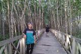 Wisata Mangrove Tongke-Tongke Sinjai tunggu pengembangan