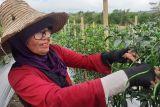 Pasokan bahan  pokok di Batam tercukupi hingga akhir tahun