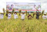 Bupati Lampung Selatan hadiri panen raya di Kecamatan Candipuro