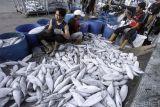 Rumpun perikanan Merauke besinergi lakukan pengawasan komoditas ikan