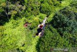 Menjaga Kawasan hutan gambut dan karbon di Tanjungjabung Timur