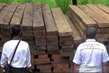 Tersangka kasus penyelundupan kayu ilegal di Sulteng bertambah satu orang