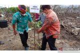 Ribuan Bibit Bakau Ditanam di Desa Ardi Mulyo, Bulungan