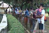 Taman Margasatwa Ragunan dikunjungi 4.901 wisatawan hari pertama dibuka kembali
