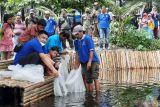 10 ribu bibit nila dilepaskan di kolam objek wisata mangrove Apar Pariaman
