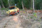 Hutan Gunung Lengkuas Bintan  gundul karena dijarah