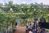 Menyulap gang sempit jadi kebun anggur