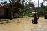 Banjir Luapan Air Sungai Di Mamuju