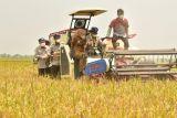 FAO mengapresiasi sektor pertanian Indonesia di masa pandemi COVID-19