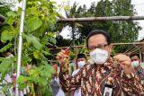 Karang Taruna Gowongan Yogyakarta mengolah lahan kosong ditanami anggur