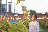 PLN catat 148 ribu petani bergabung dalam program listrik agrikultur