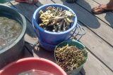 BTNK ajak masyarakat jaga keanekaragaman hayati di TN Komodo