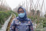 Kabupaten Bogor berupaya tingkatkan produktivitas cabai
