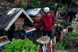 Budi daya madu teuweul di Lampung
