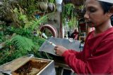 Budidaya madu teuweul di Lampung