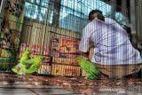 BB KSDA Riau amankan burung yang dibawa sopir travel dari Sumbar