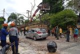 Minibus di Pekanbaru ringsek tertimpa pohon