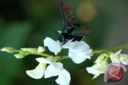 Empat spesies baru kumbang ditemukan di Maluku