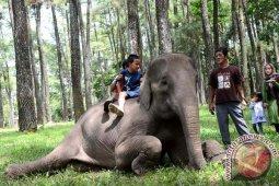 Taman wisata Punti Kayu Palembang dibuka kembali, batasi jumlah pengunjung