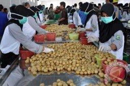Ekspor kentang ke Singapura-Malaysia meningkat
