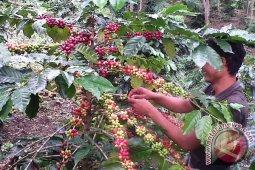 12 petani kopi Aceh pelatihan di Jember