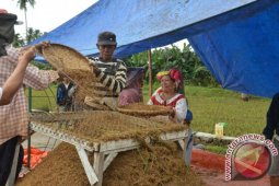 Petani Pohuwato Merugi Akibat Bencana Banjir