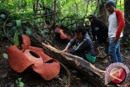 Konservasi dan Hutan Lindung Sumber Kehidupan