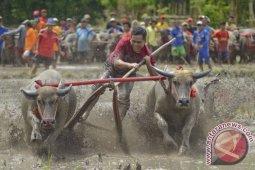 Barapan Kebo Sumbawa memberikan daya tarik bagi  wisatawan mancanegara