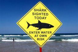 Lagi, Peselancar Australia tewas diserang hiu