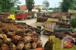 Dinas Mukomuko: Mayoritas pabrik beli TBS sawit dengan harga rendah