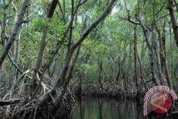 Komunitas Sesalkan Pembabatan Mangrove di Tapak PLTU Oleh Investor China